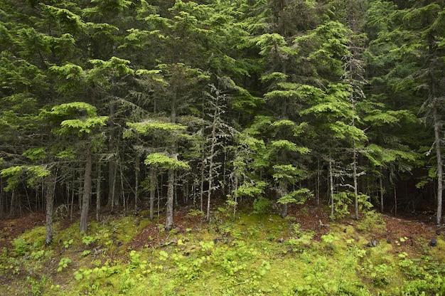 Floresta de montana