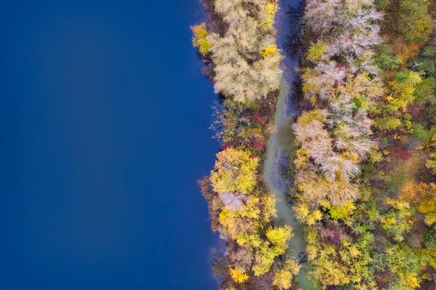 Floresta de outono colorida com árvores na margem de um fundo de lago azul - vista aérea superior.