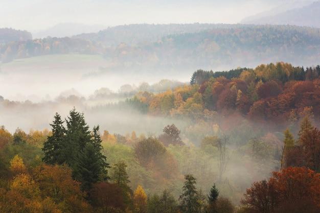 Floresta de outono colorida de tirar o fôlego, cheia de diferentes tipos de árvores cobertas de nevoeiro