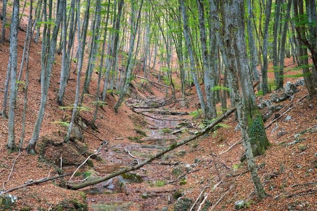 Floresta de outono colorida e nevoenta