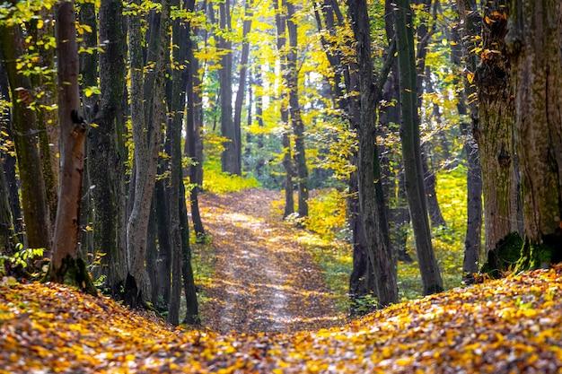 Floresta de outono com árvores coloridas e uma estrada coberta de folhas caídas. beleza na natureza