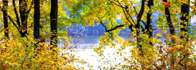 Floresta de outono com folhas amarelas nas árvores perto do rio, panorama de outono