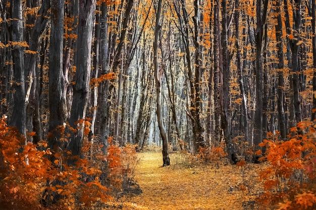 Floresta de outono com folhas de laranjeira nas árvores