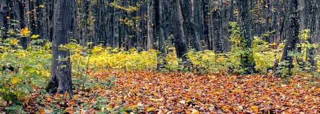 Floresta de outono com folhas verde-amareladas em brotos de árvores e folhas marrons secas caídas na estrada, panorama