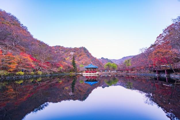 Floresta de outono do parque nacional naejangsan, coreia do sul