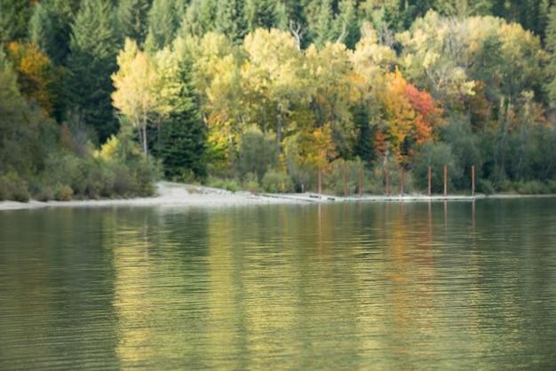 Floresta de outono e rio no outono
