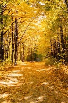 Floresta de outono em clima ensolarado de outono paisagem de outono árvores de outono