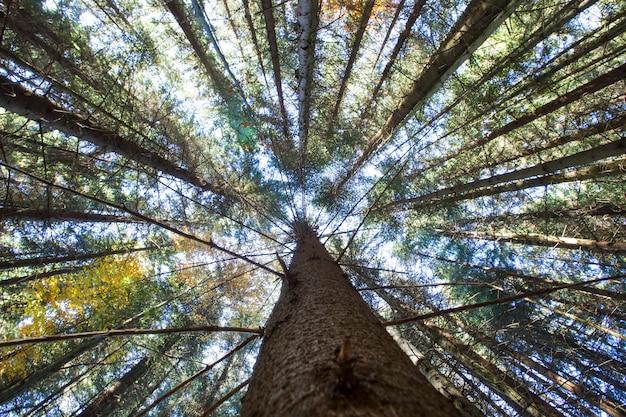 Floresta de outono em dia ensolarado