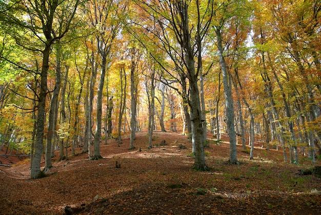 Floresta de outono em um dia quente e ensolarado
