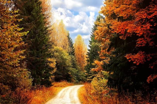 Floresta de outono. estrada, entre, a, outono, árvores