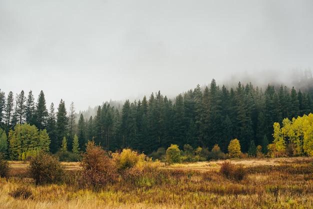 Floresta de outono nas montanhas