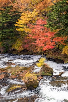 Floresta de outono outono nikko japão
