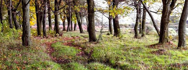Floresta de outono perto do rio com uma estrada de terra entre árvores e folhas caídas no chão
