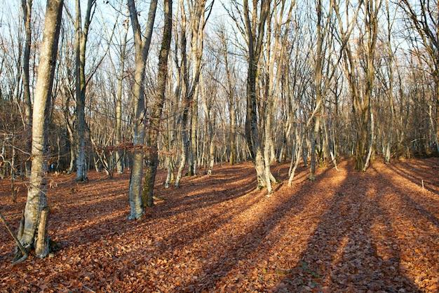 Floresta de outono.