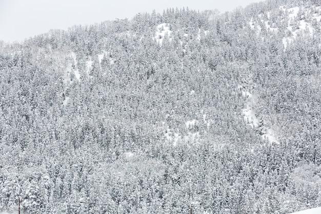 Floresta de paisagem de inverno