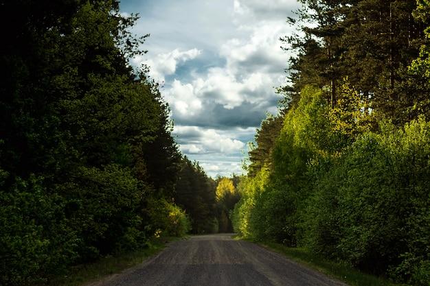 Floresta de paisagem verde linda de verão e estrada na floresta.