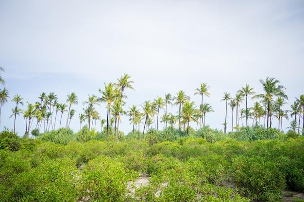 Floresta de palmeiras linda perto da praia
