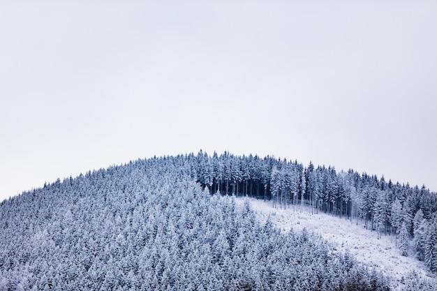 Floresta de pinheiros coberta de neve no topo de uma colina em sudetes, polônia