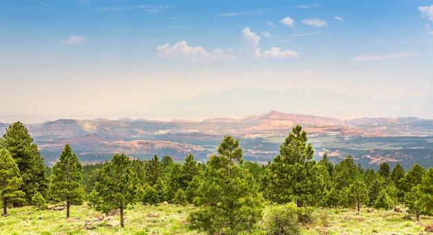 Floresta de pinheiros contra montanhas rochosas.