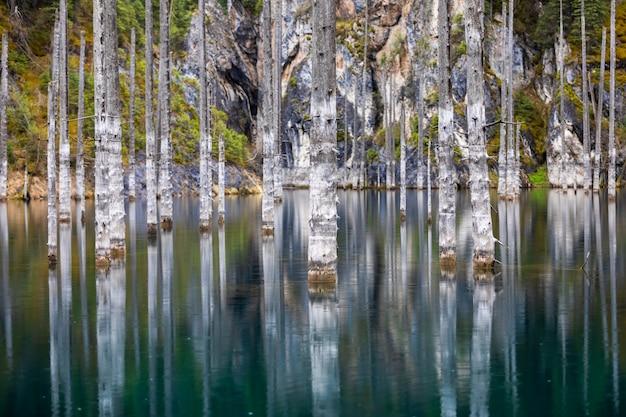 Floresta de pinheiros inundada do lago kaindy