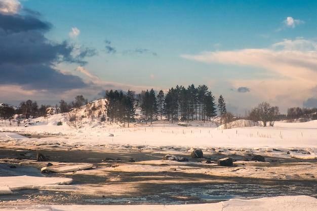 Floresta de pinheiros na colina de neve no litoral