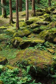 Floresta de pinheiros no himalaia