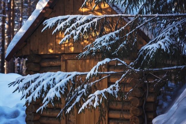 Floresta de pinheiros no inverno