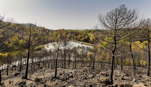 Floresta de pinheiros queimada por um incêndio com pântano cheio de água e céu azul ao fundo