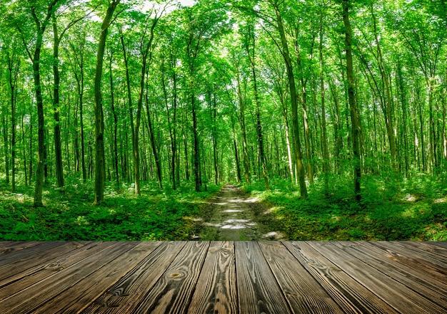 Floresta de primavera com árvores altas