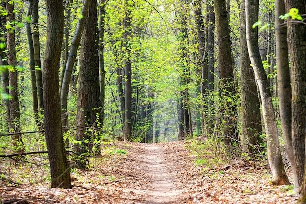 Floresta de primavera verde com primeiras folhas de primavera e caminho