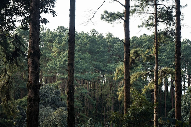 Floresta de verão e a estrada para a floresta, musgo na árvore