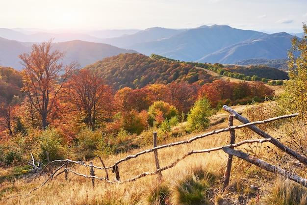 Floresta de vidoeiro na tarde ensolarada durante a temporada de outono.