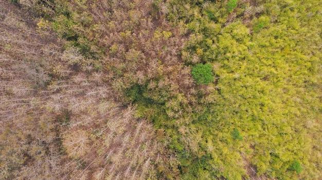 Floresta de vista superior aérea, fundo de parque natural