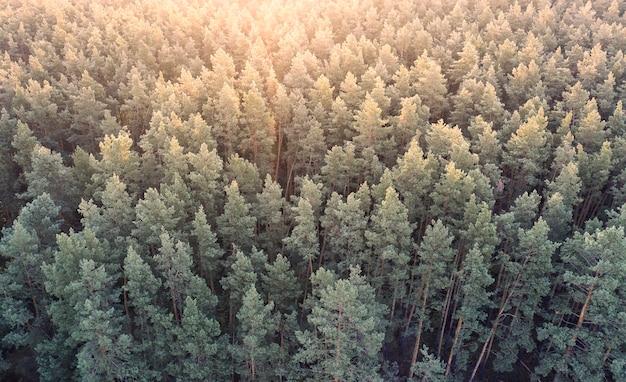 Floresta decídua de outono, vista aérea, padrão ou textura.