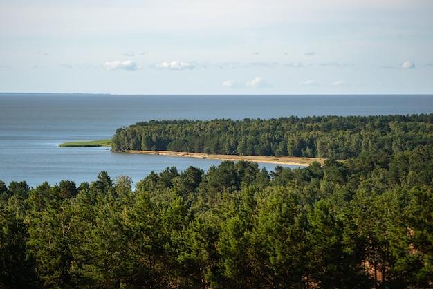 Floresta densa à beira-mar.