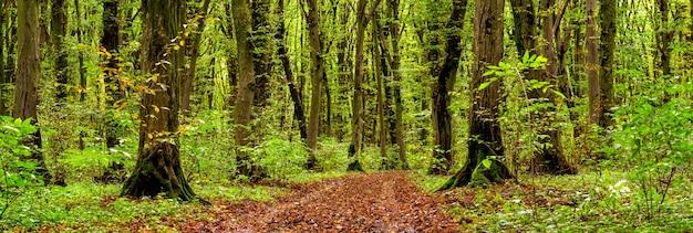 Floresta densa de outono com árvores cobertas de musgo e uma estrada com folhas caídas
