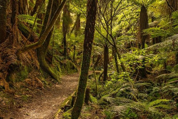 Floresta densa e exuberante de um verde vibrante, como uma mata nativa remota no meio do nada