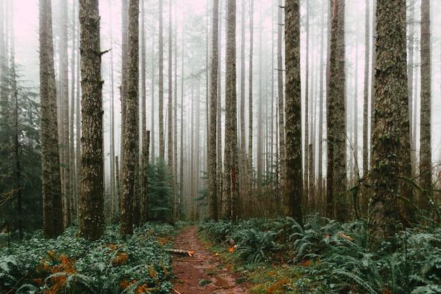 Floresta densa e um caminho lamacento durante o dia