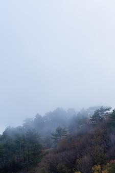 Floresta densa mista em neblina