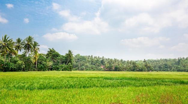 Floresta densa na selva do sri lanka