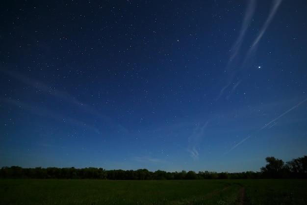 Floresta e campo no fundo do céu noturno com estrelas