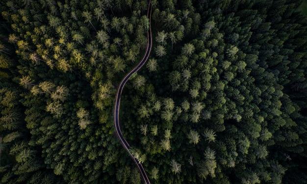 Floresta e estrada de cima