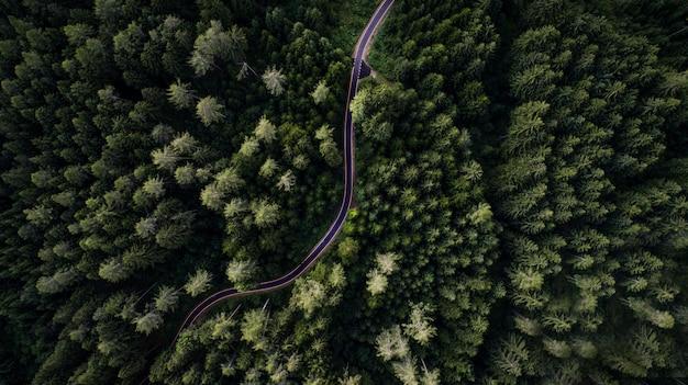 Floresta e estrada