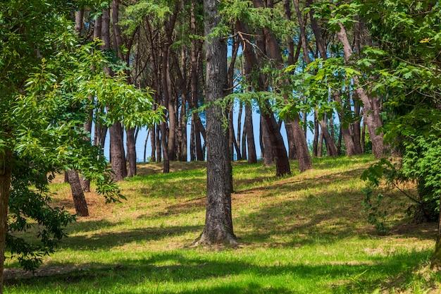 Floresta e grama