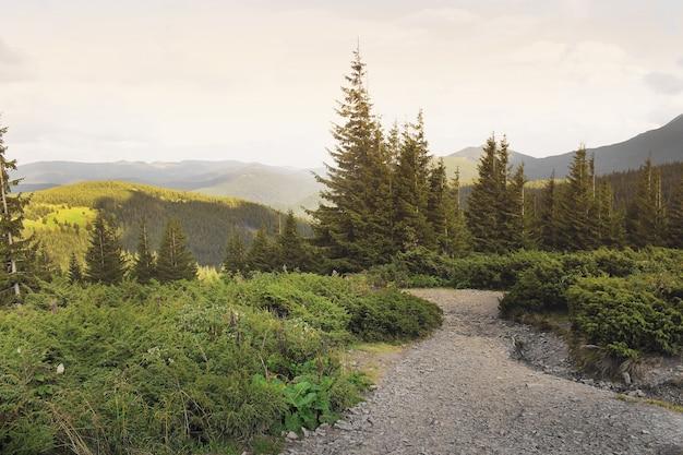 Floresta e montanhas