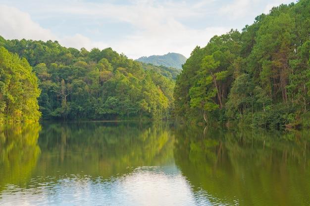 Floresta e reservatório