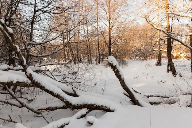 Floresta e um lago congelado Foto Premium