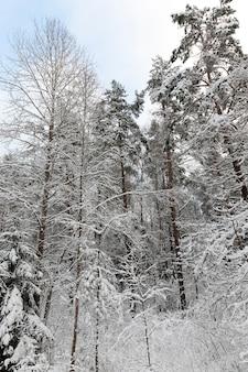 Floresta em geadas