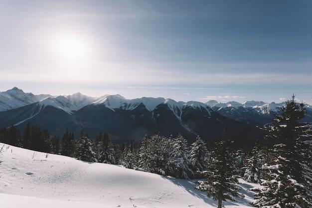 Floresta em montanhas nevadas