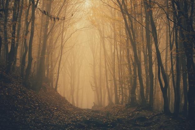 Floresta em nevoeiro com névoa. floresta de aparência assustadora de fada em um dia nublado.